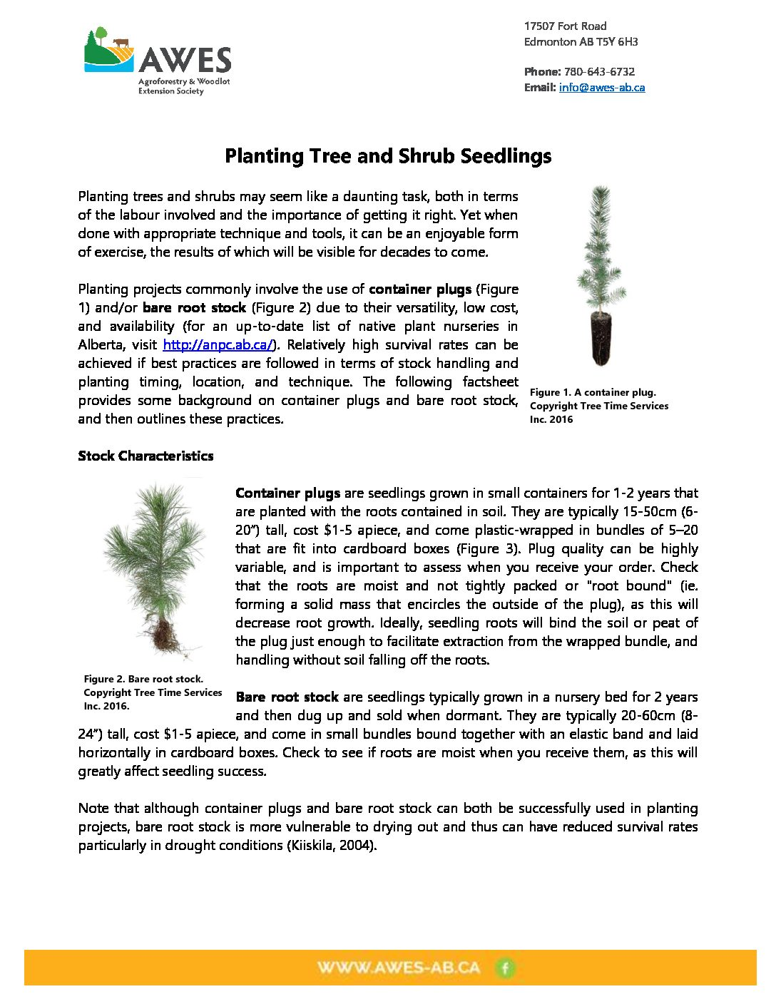 Planting Tree and Shrub Seedlings
