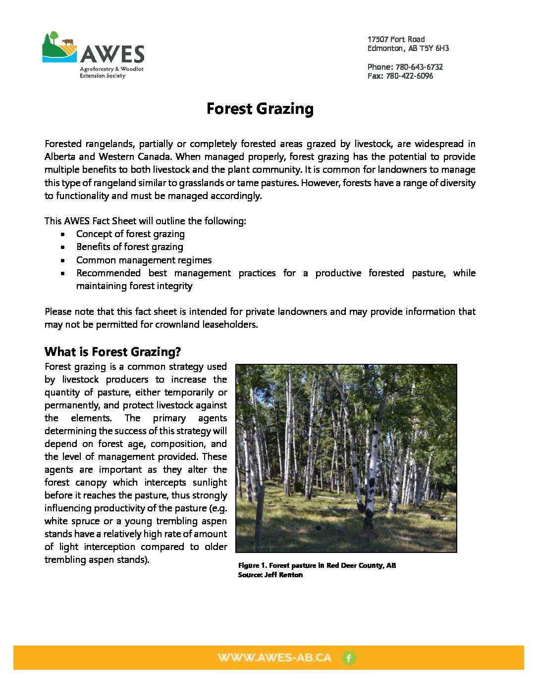Forest Grazing