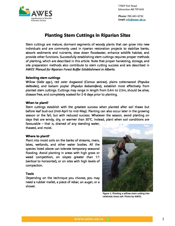 Planting Stem Cuttings in Riparian Sites