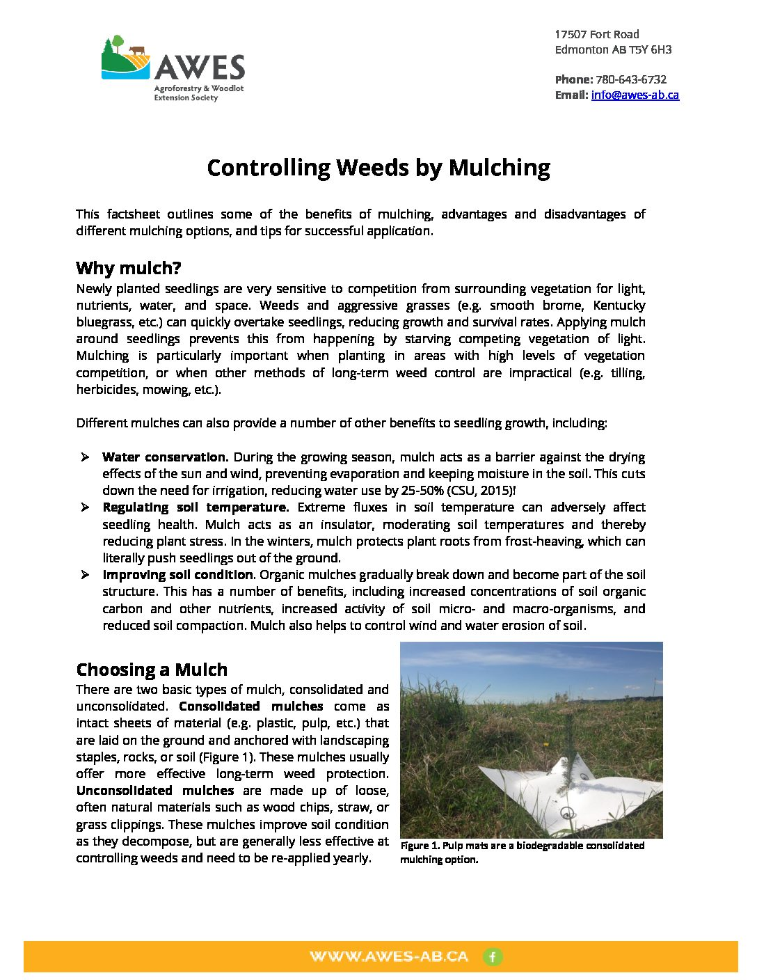 Controlling Weeds by Mulching – AWES | Agroforestry and