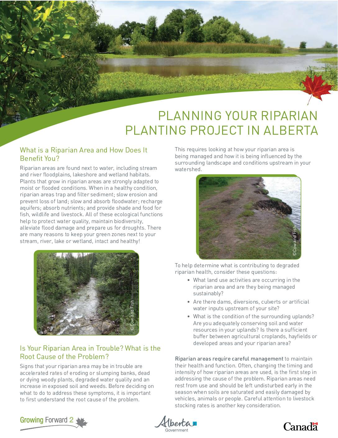 Planning your Riparian Planting Project in Alberta