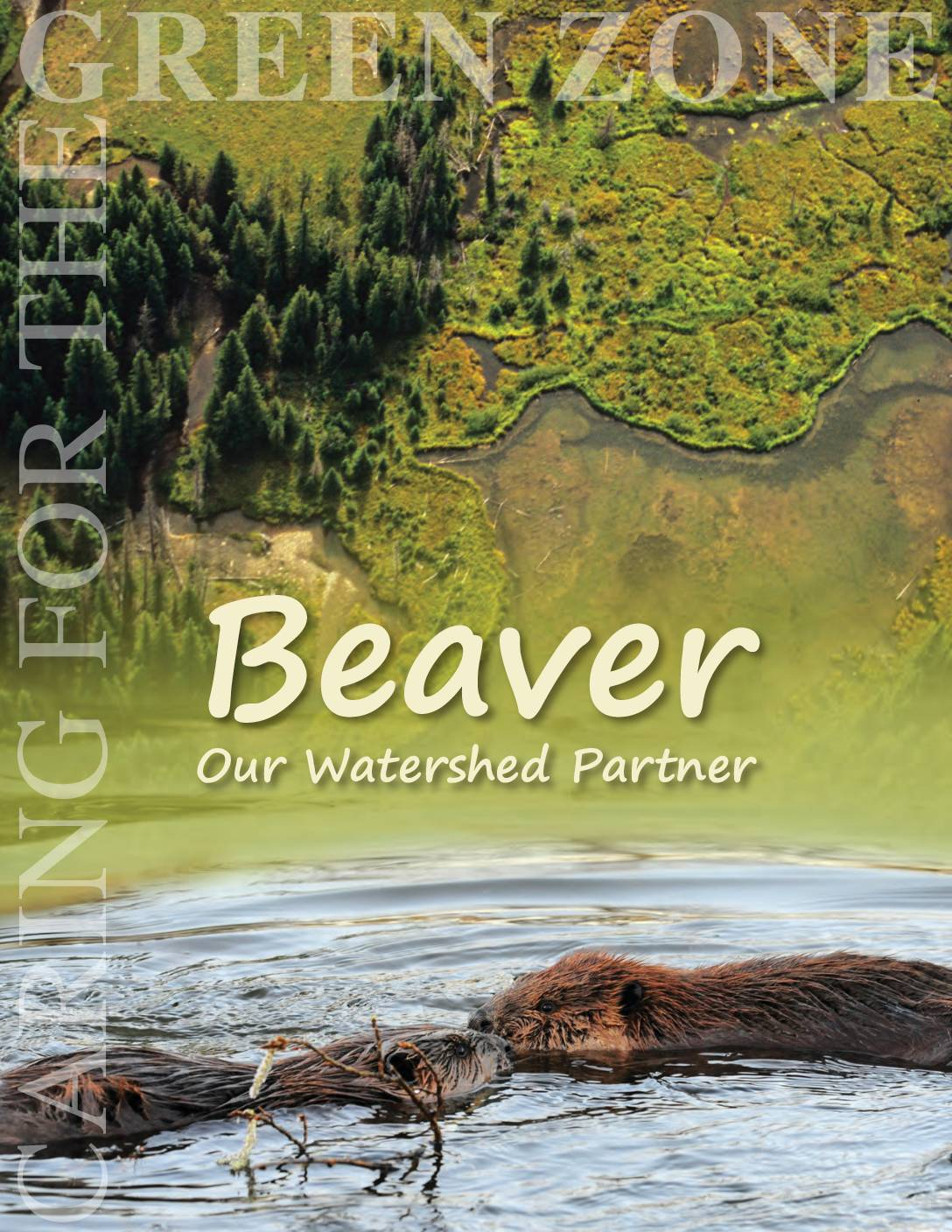 Beaver: Our Watershed Partner