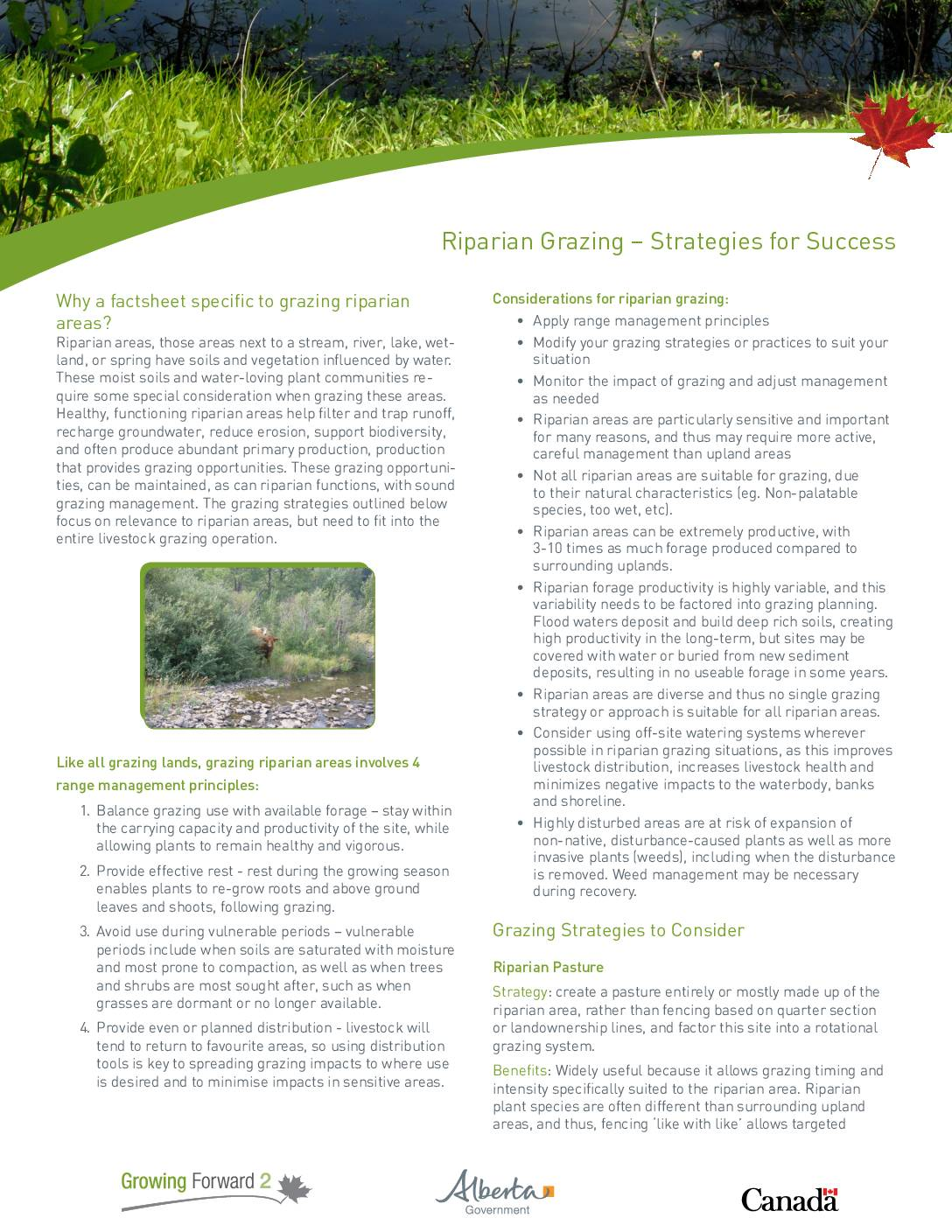 Riparian Grazing – Strategies for Success